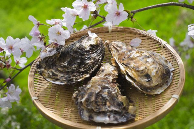 亜鉛をたくさん含んでいる牡蠣