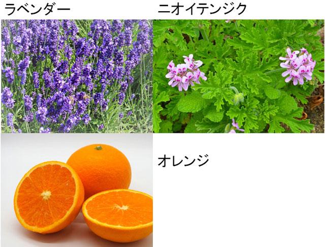 ラベンダー、ニオイテンジク、オレンジ